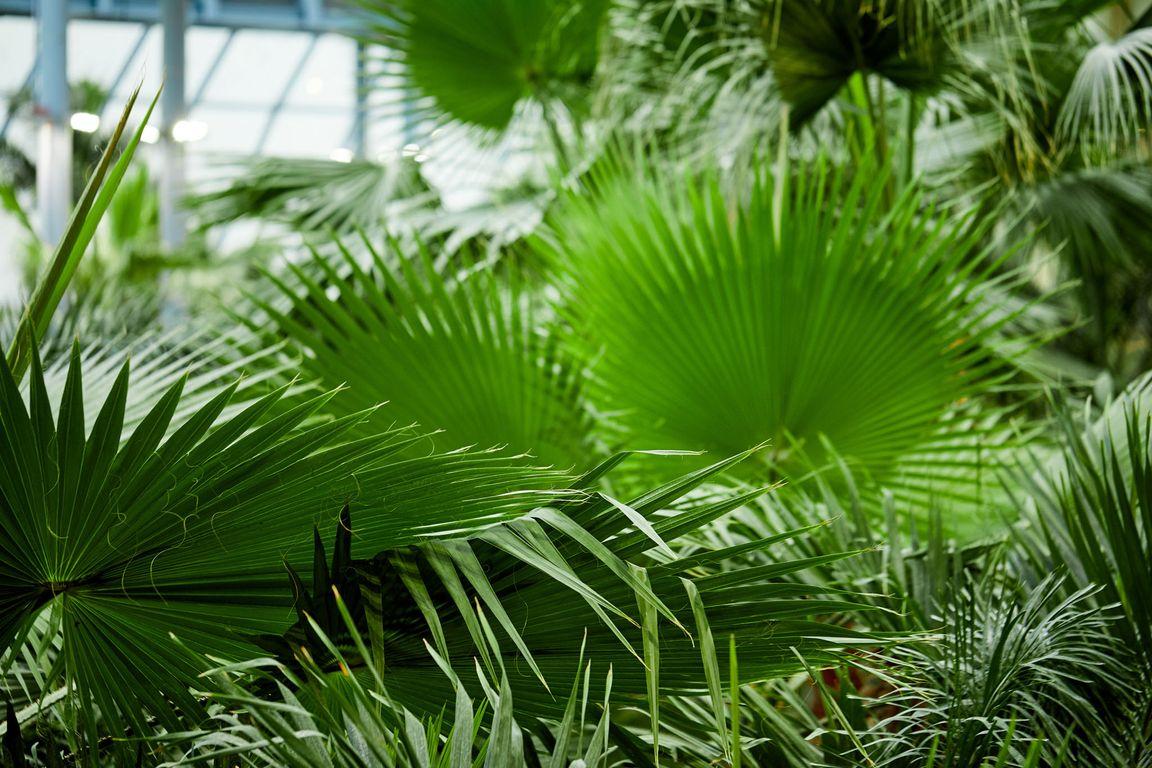 w Parku Wodnym Suntago Wodny Świat jest ogród tropikalny