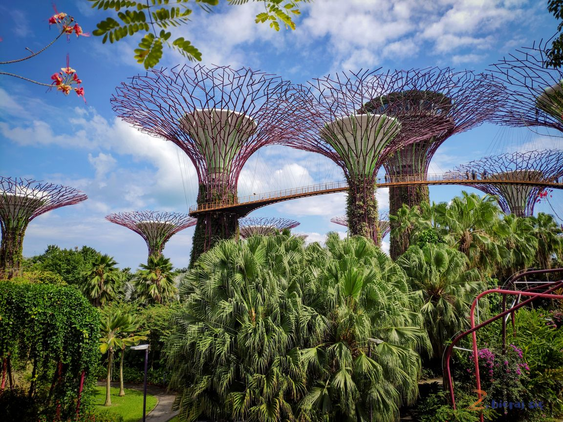 singapur-plan-zwiedzania-zbierajsie_supertree_gardens_by_the_bay