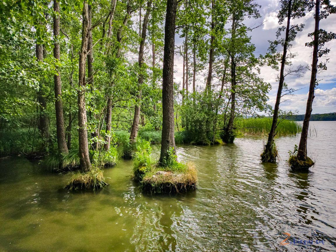lubuskie_jeziora_lubniewice_jezioro_lubniewsko-zbierajsie (2)