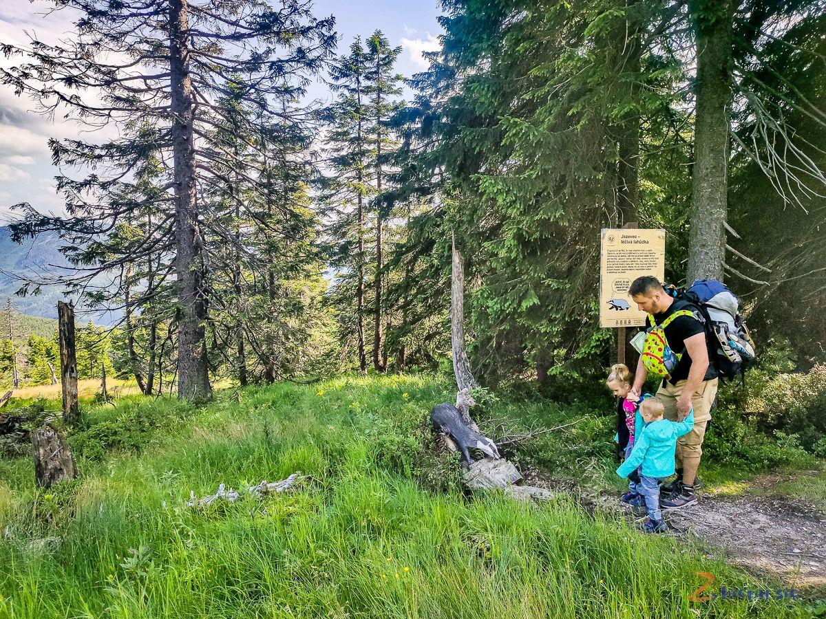 ścieżka przyrodnicza wczeskich Karkonoszach