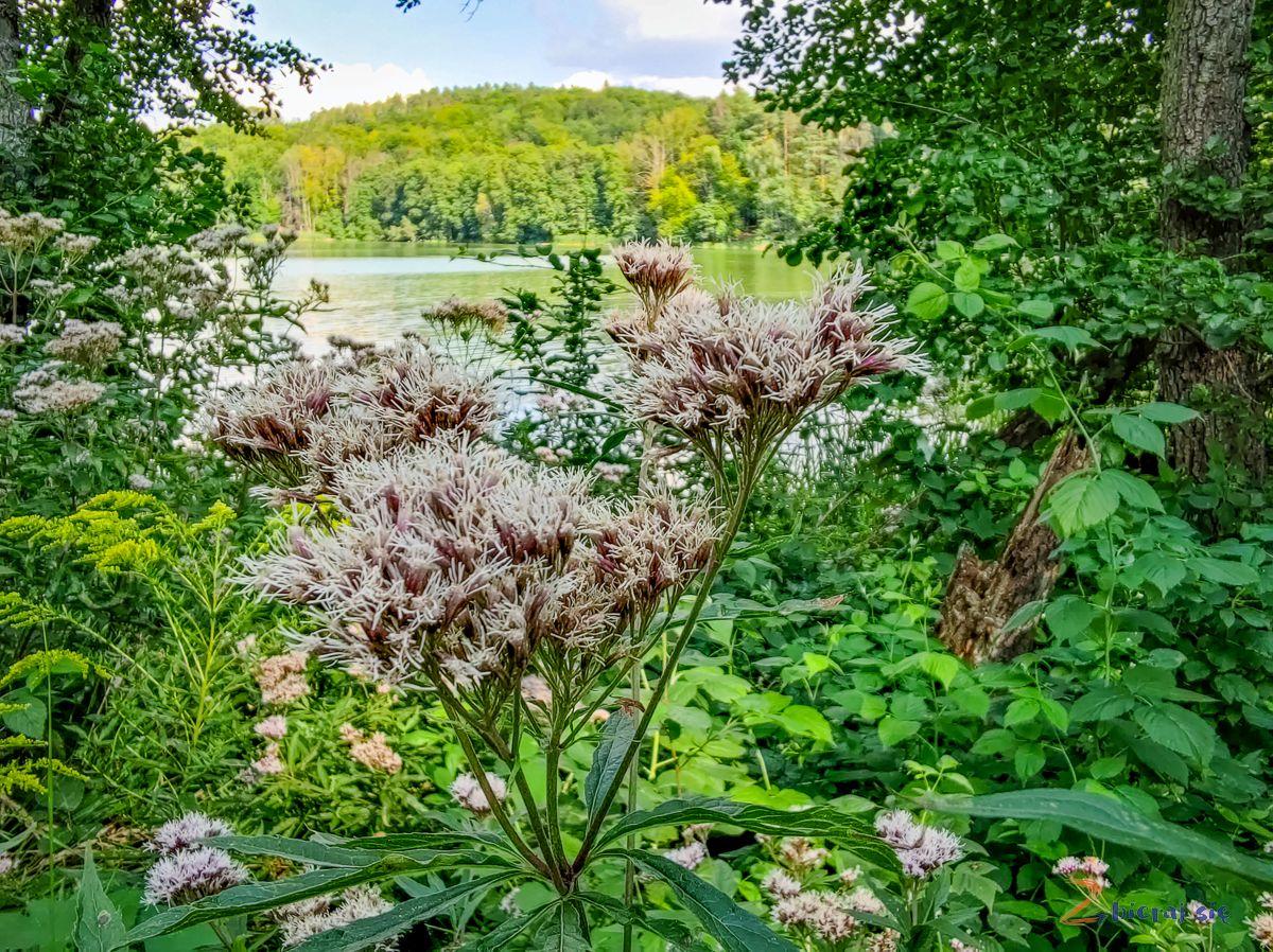 jezioro_lubniewsko_lubniewice_lubuskie_zbierajsie (85)