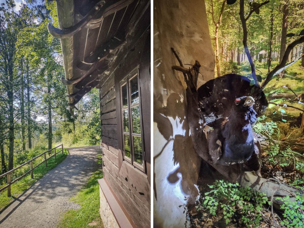 barania Góra zdziećmi izba leśna