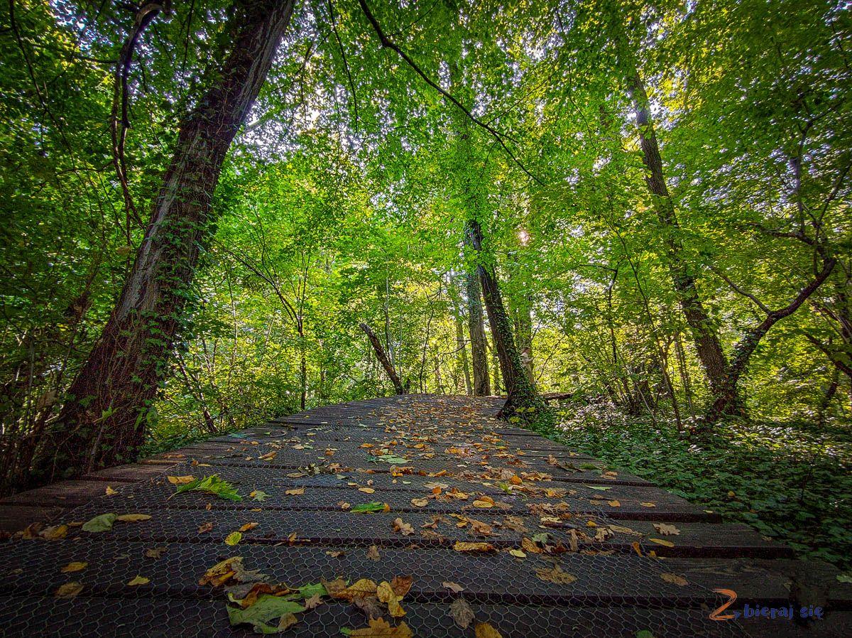 Park Sobieskiego wWalbrzychu_jesien