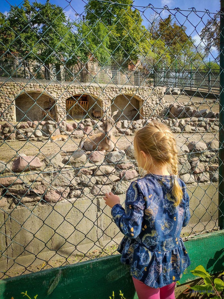 Torun_dla_dzieci_zbierajsie_zoo_torun_ogrod_zoobotaniczny