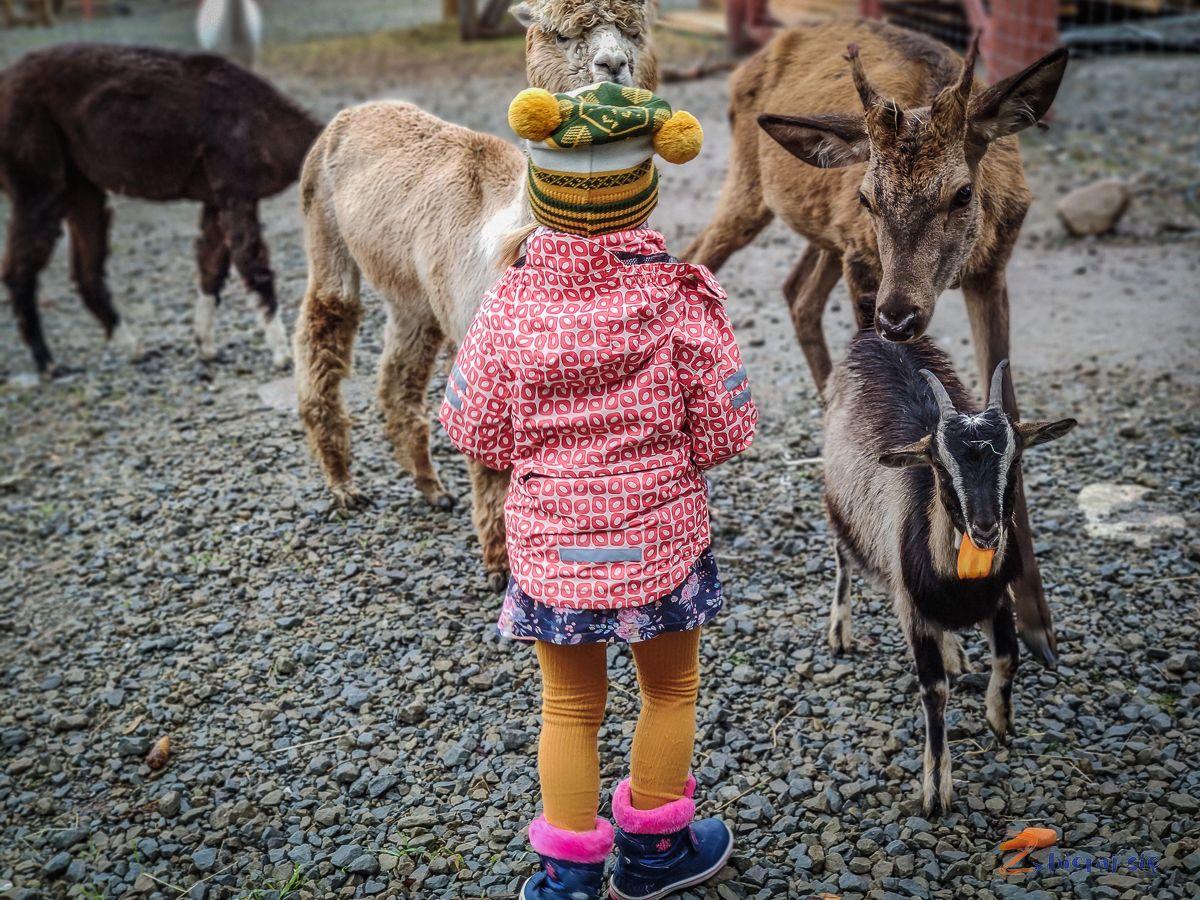 tatry-z-dziecmi-tatrzanskie-zoo-zbierajsie (1)
