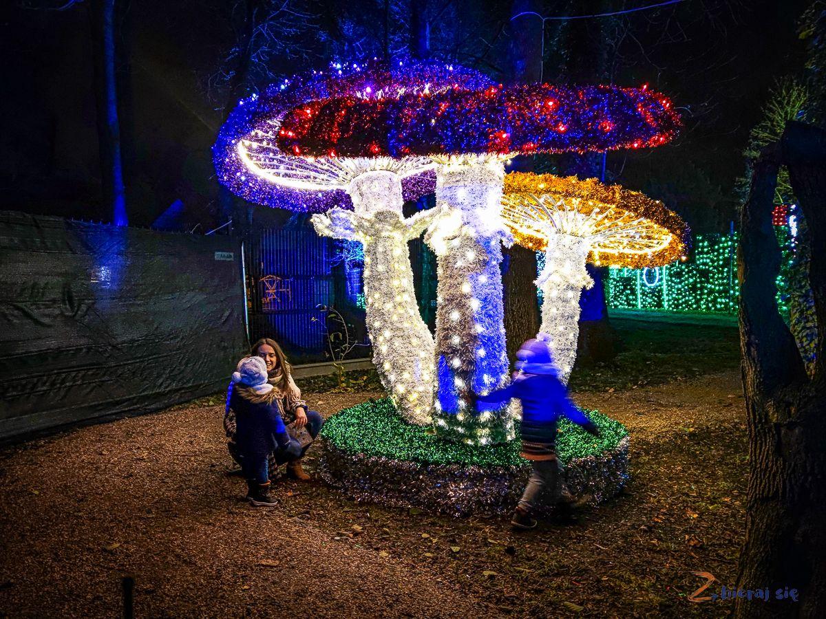 Grzyby - Park Iluminacji wZamku Topacz