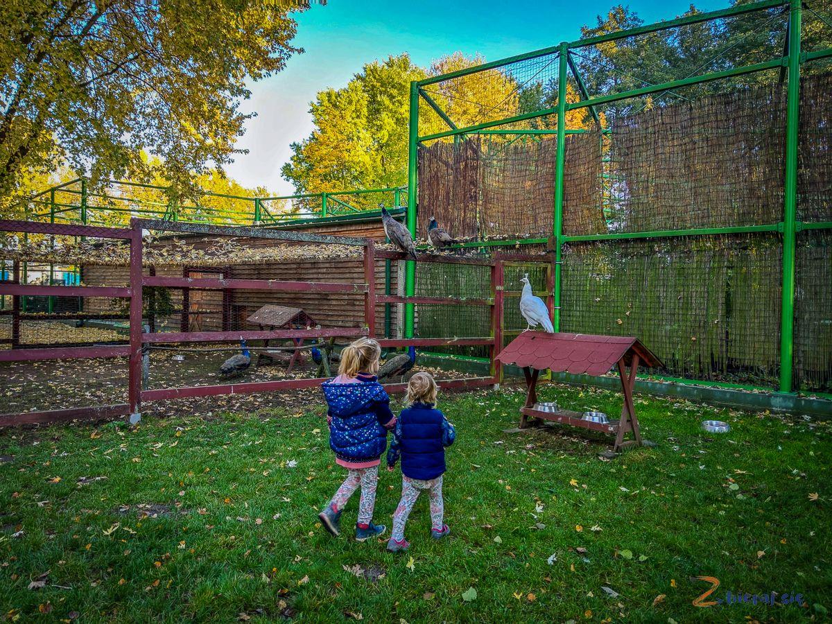 Zoo wLubinie _ Park Wrocławski