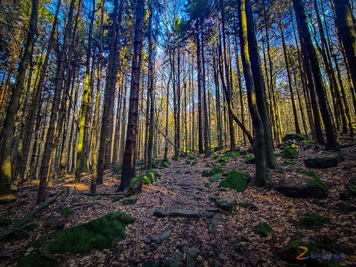 las wŚlężańskim Parku Krajobrazowym