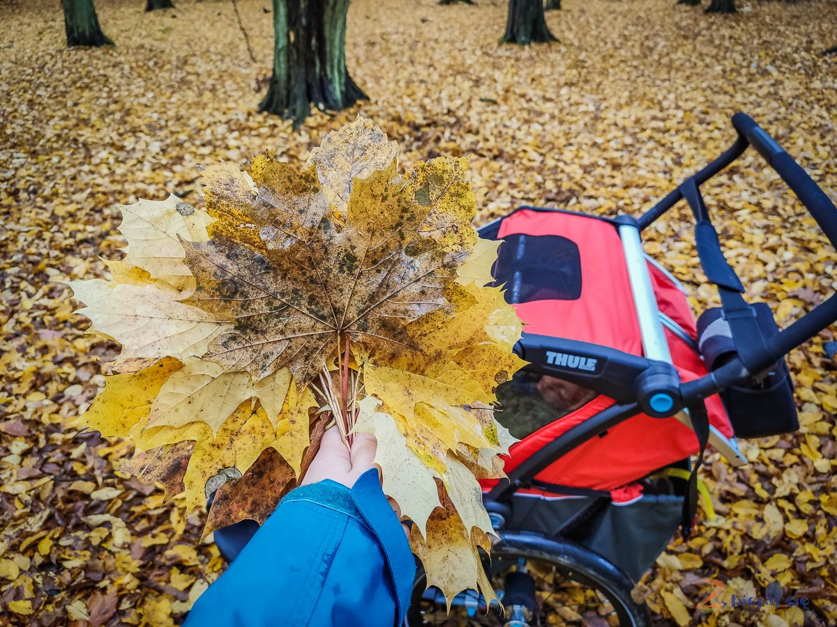 jesienny spacer zThule Chariot Cross2