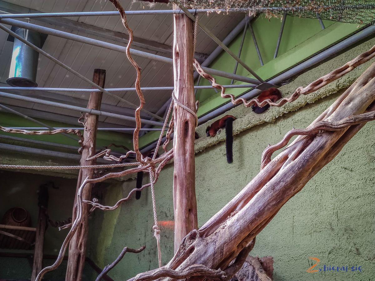 Zoo-Wroclaw-zima-zbierajsie (111)