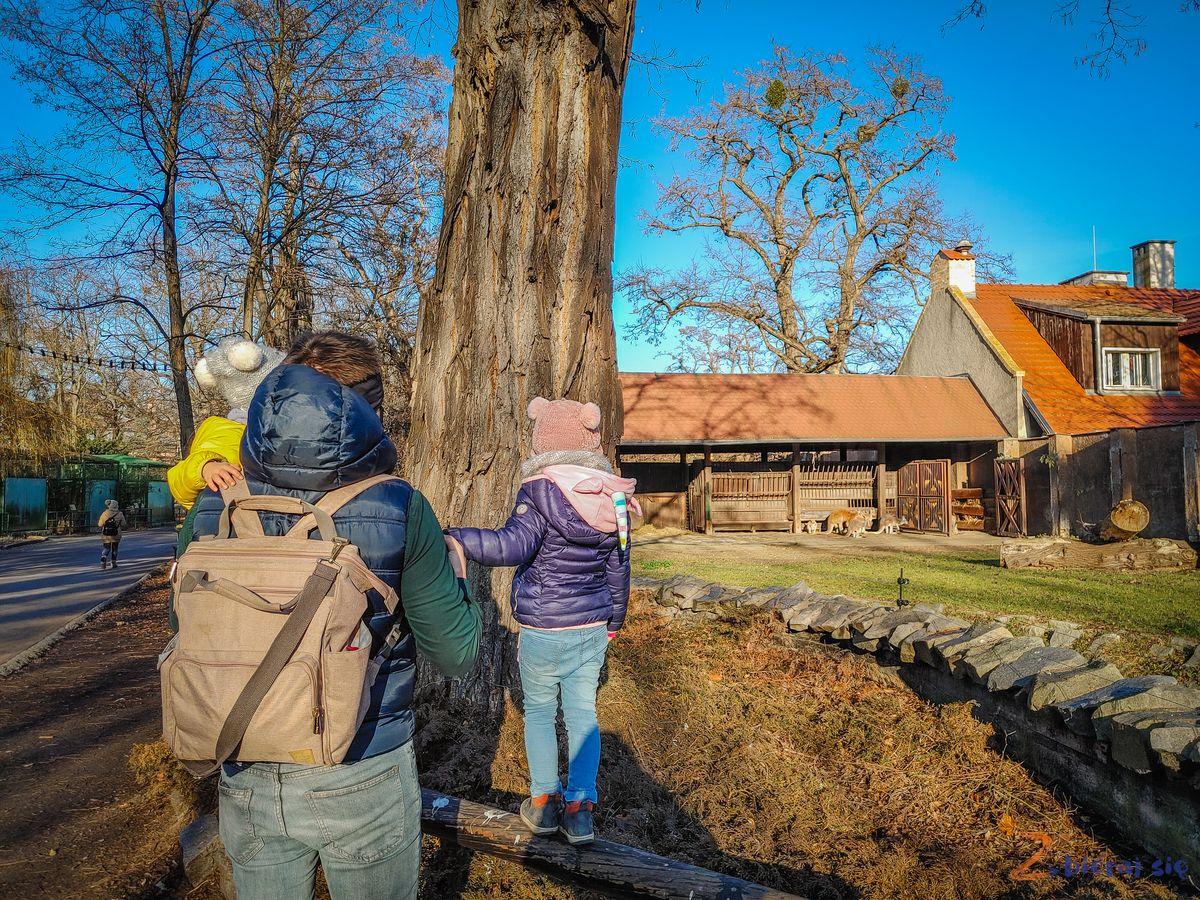 Zoo-Wroclaw-zima-zbierajsie (2)