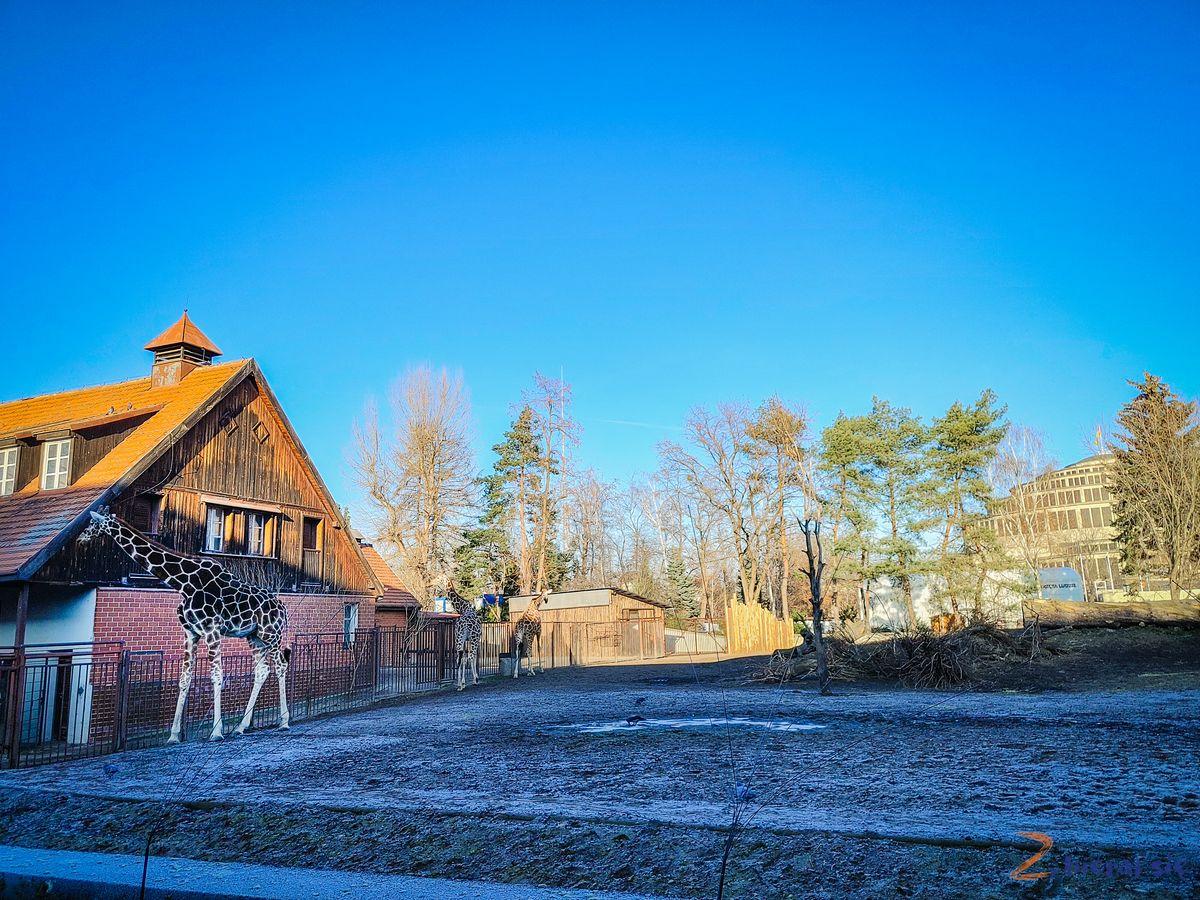 Zoo-Wroclaw-zima-zbierajsie (6)