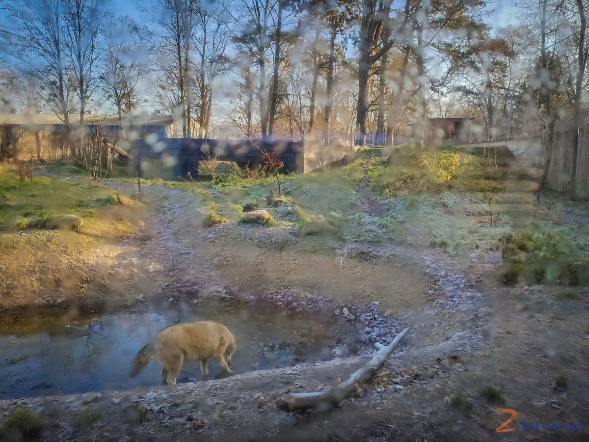Zoo-Wroclaw-zima-zbierajsie (60)