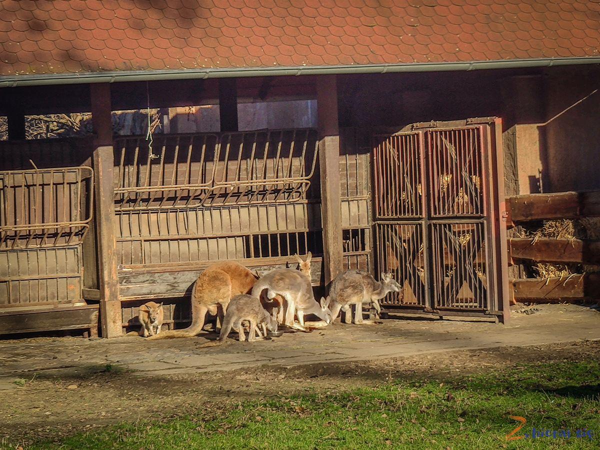 Zoo-Wroclaw-zima-zbierajsie (66)