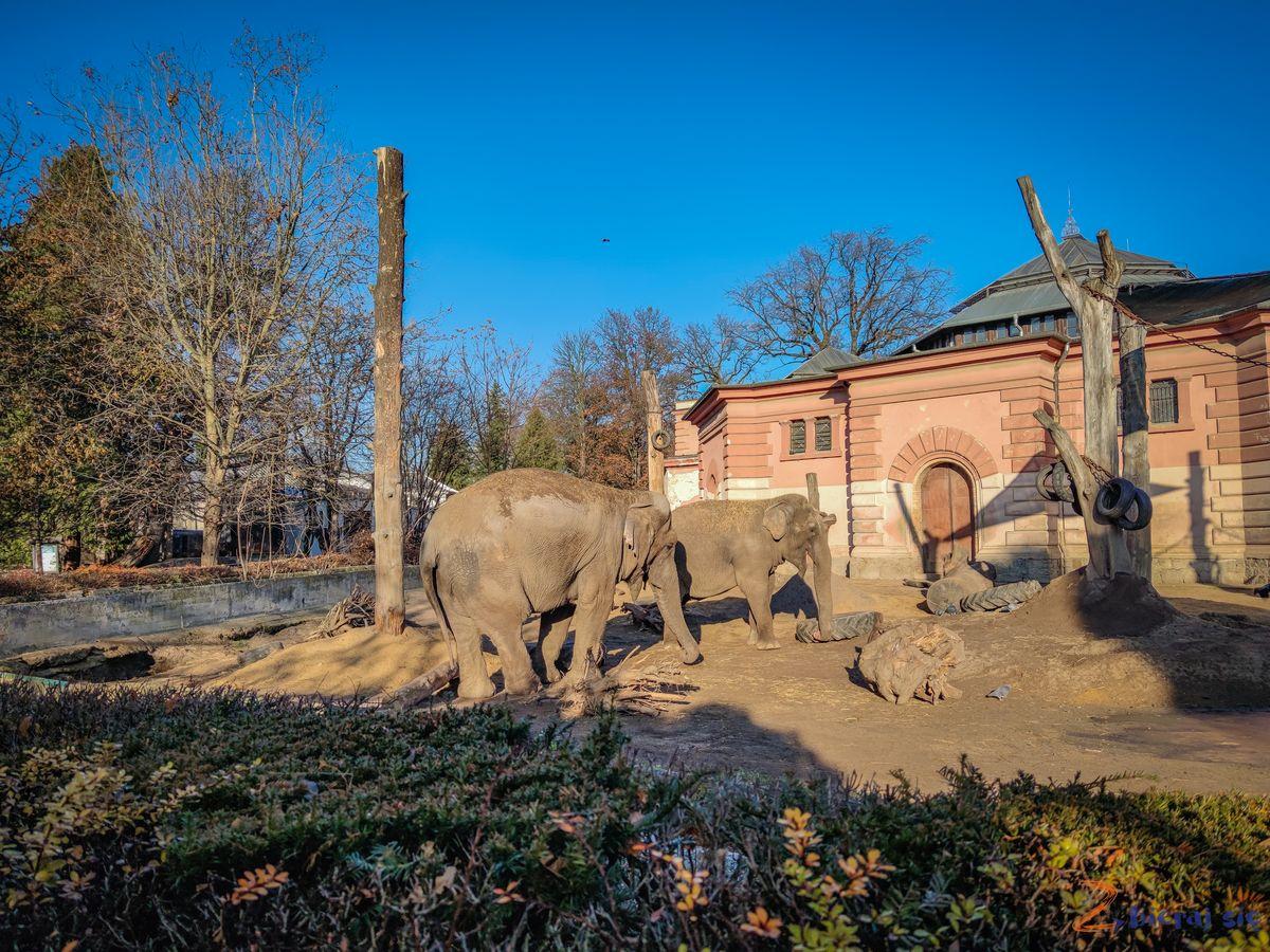 Zoo-Wroclaw-zima-zbierajsie (72)