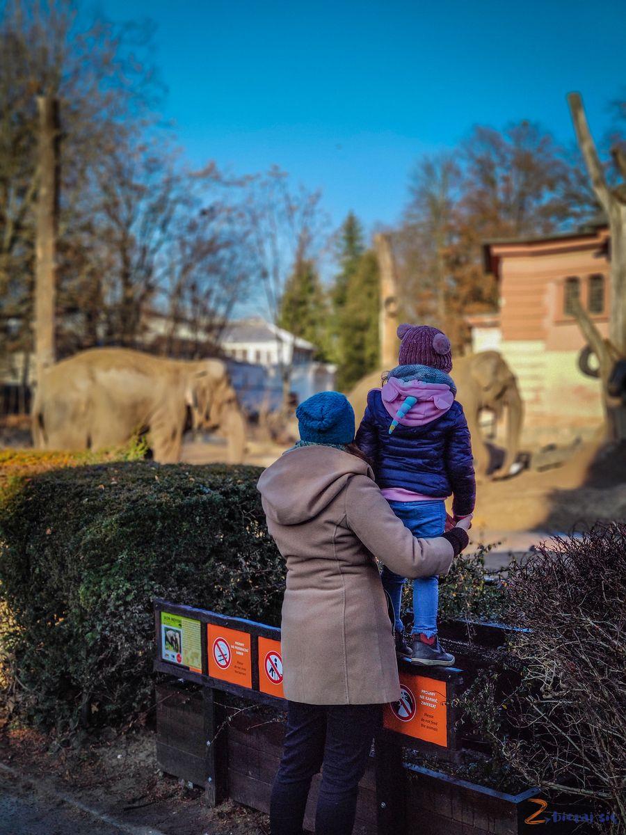 Zoo-Wroclaw-zima-zbierajsie (75)