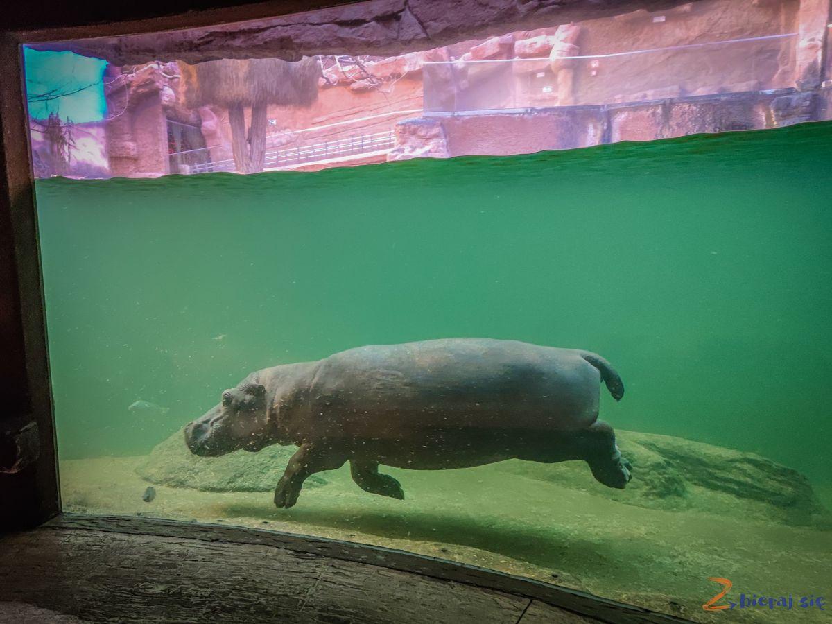 Zoo-Wroclaw-zima-zbierajsie (91)