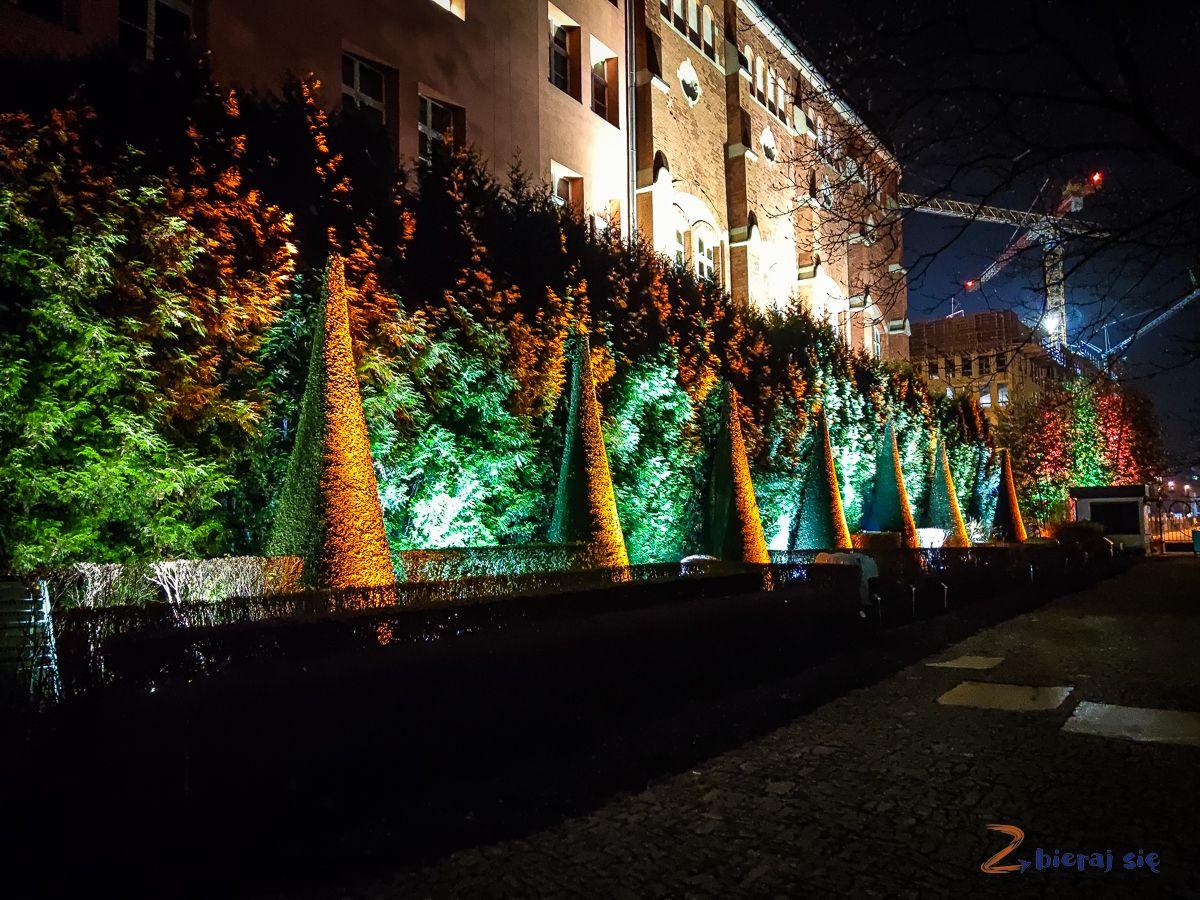wroclaw-oświetlony Ogród Botaniczny-swiatlogrod-zbierajsie (12)