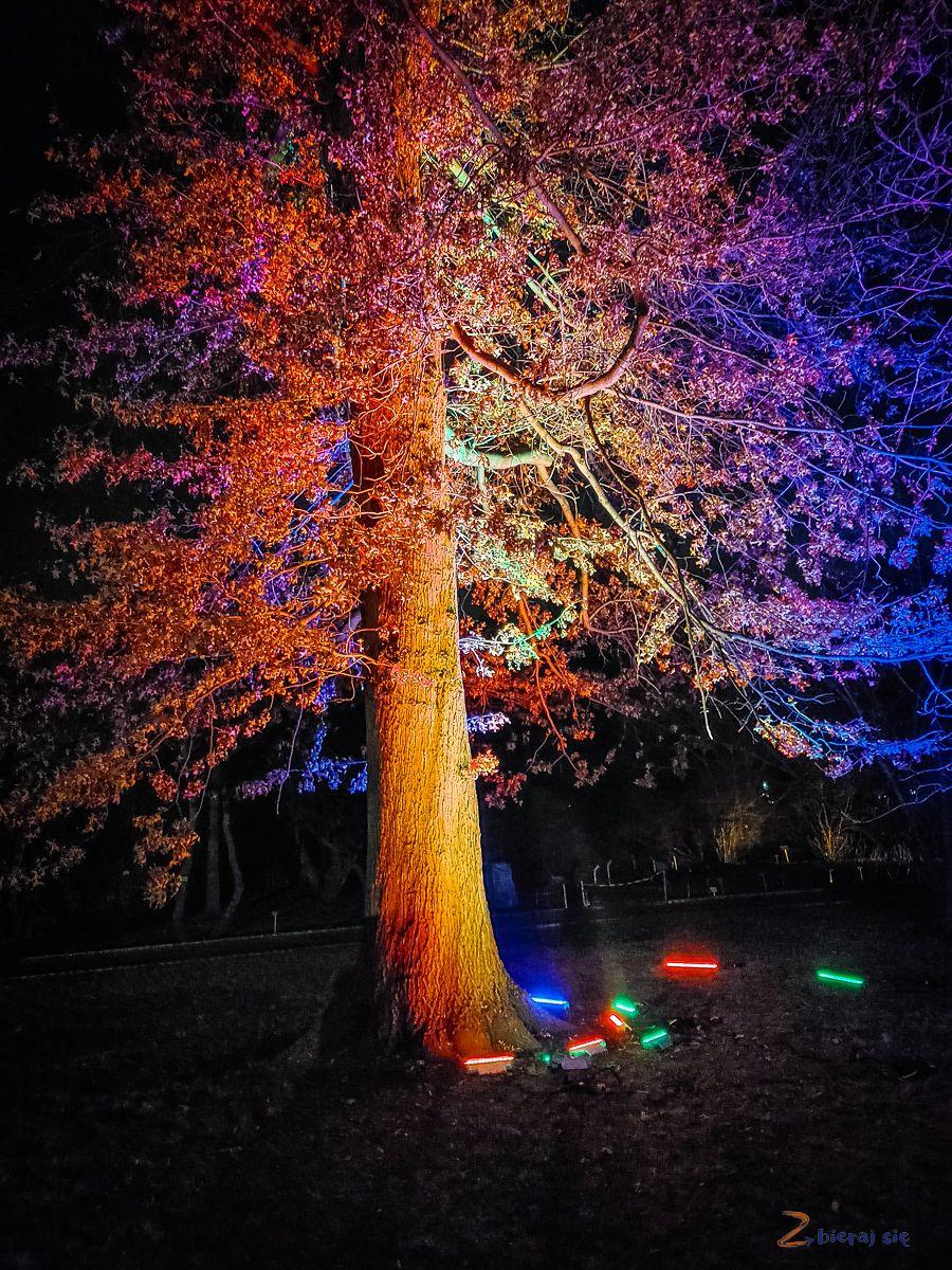 wroclaw-oświetlony Ogród Botaniczny-swiatlogrod-zbierajsie (2)