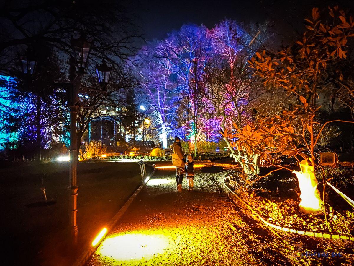 wroclaw-oświetlony Ogród Botaniczny-swiatlogrod-zbierajsie (21)