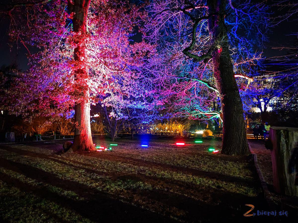 wroclaw-oświetlony Ogród Botaniczny-swiatlogrod-zbierajsie (35)