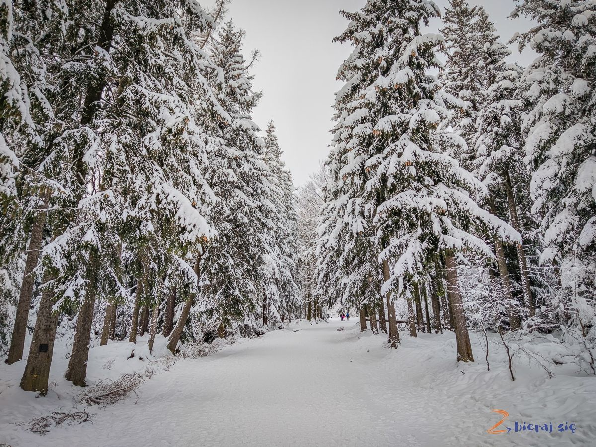 Karkonosze-z-dziećmi-zimą-Czy warto-iść-do-Samotni-zbierajsie (4)