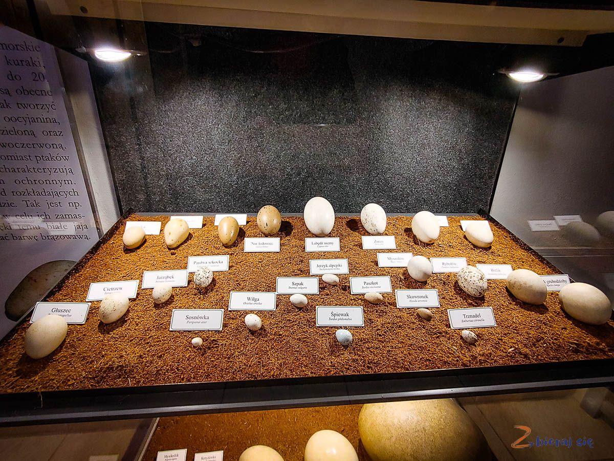Co zobaczyć wJeleniej Górze - Muzeum Przyrodnicze wJelniej Górze (10)