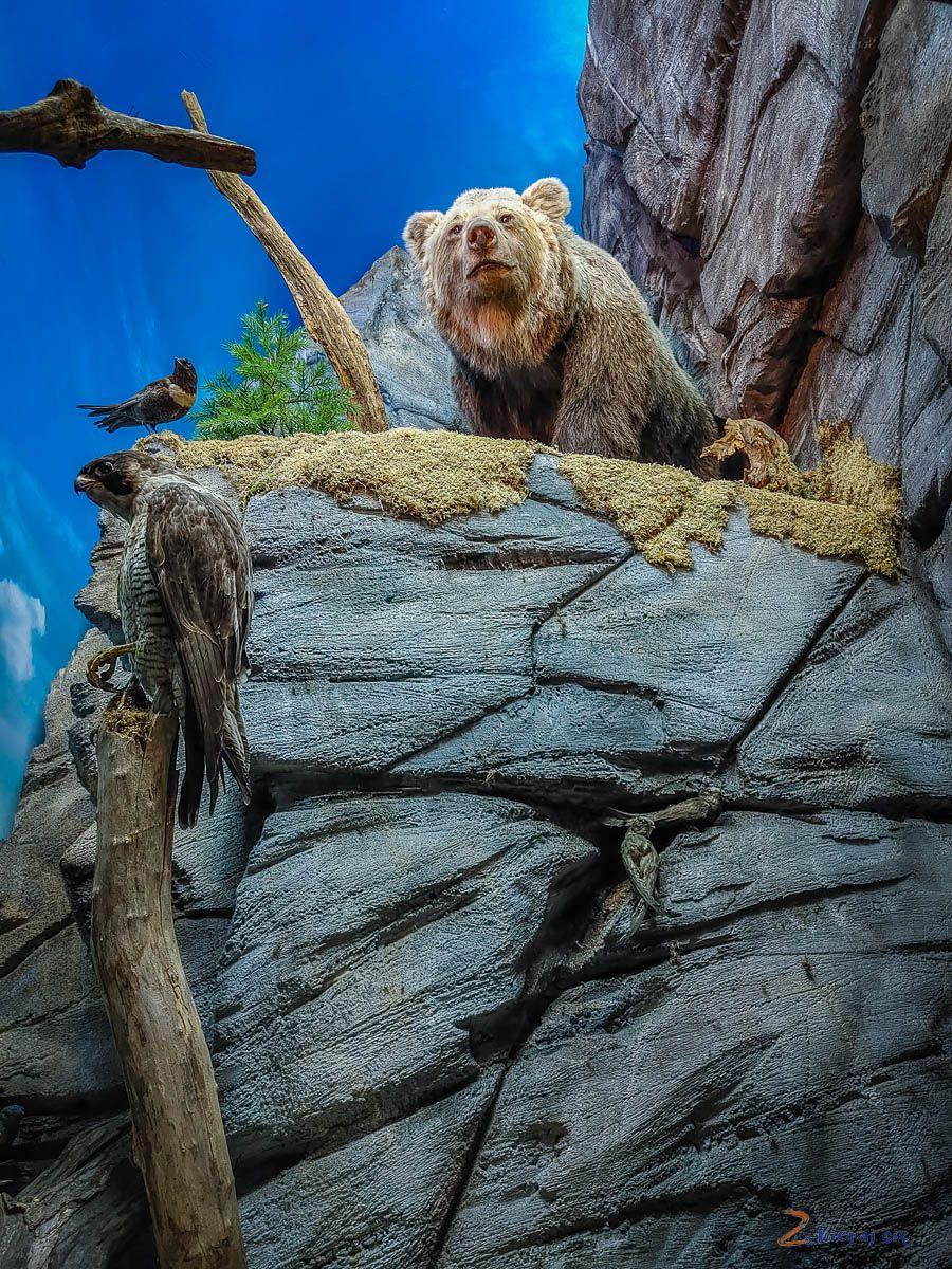 Co zobaczyć wJeleniej Górze - Muzeum Przyrodnicze wJelniej Górze (14)