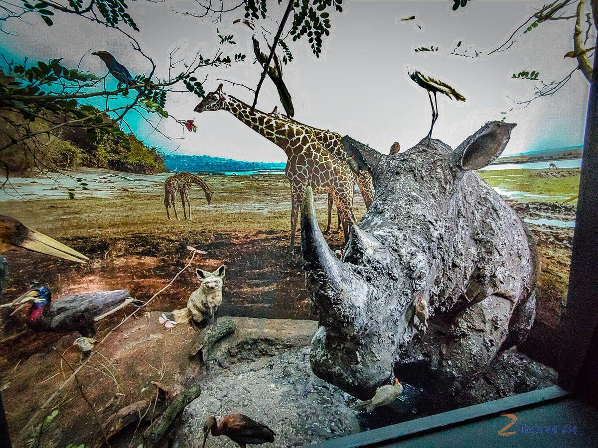 Co zobaczyć wJeleniej Górze - Muzeum Przyrodnicze wJelniej Górze (17)