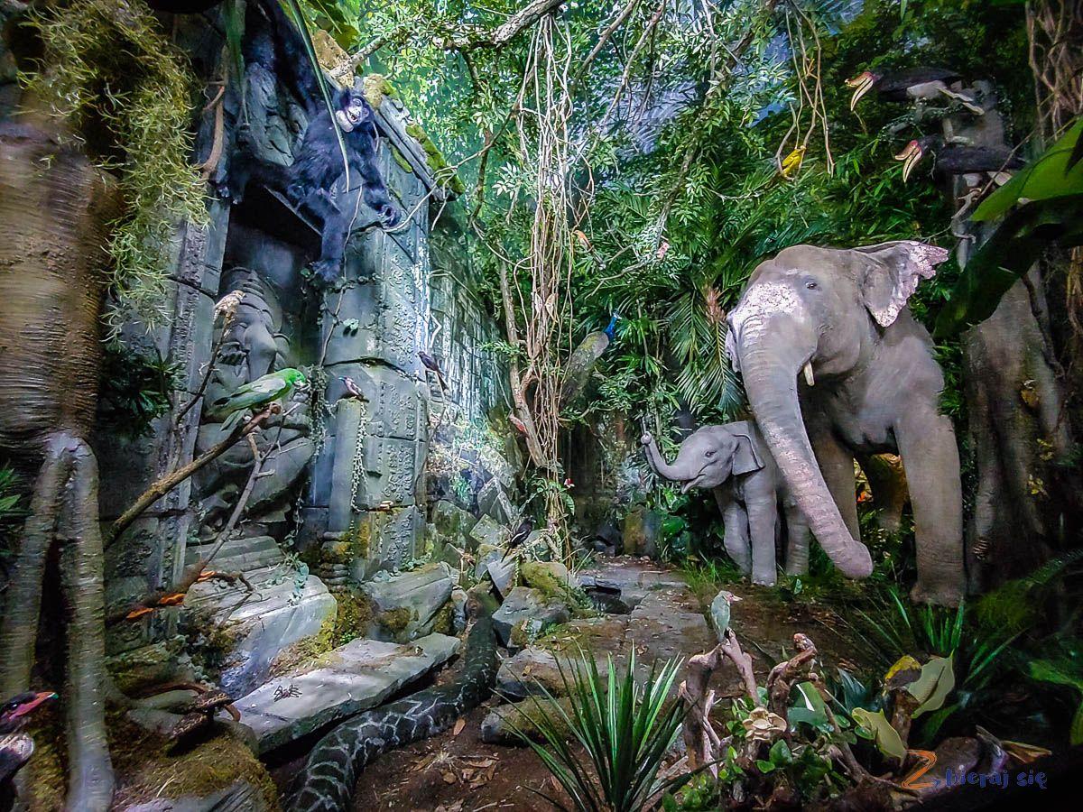 Co zobaczyć wJeleniej Górze - Muzeum Przyrodnicze wJelniej Górze (20)