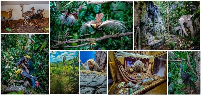 Co zobaczyć w Jeleniej Górze - Muzeum Przyrodnicze w Jelniej Górze (30)