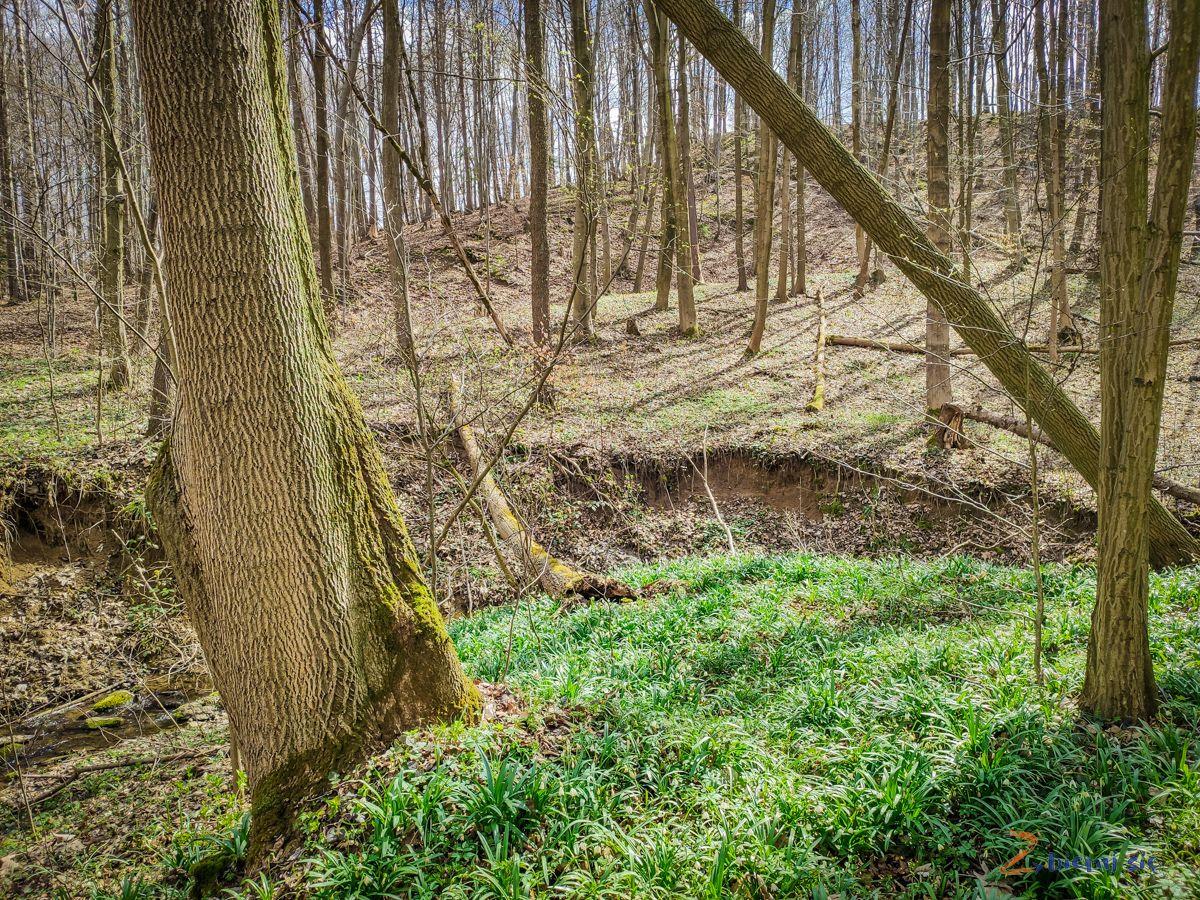 Cieplowody-Muszkowicki Las Bukowy-zbierajsie (35)