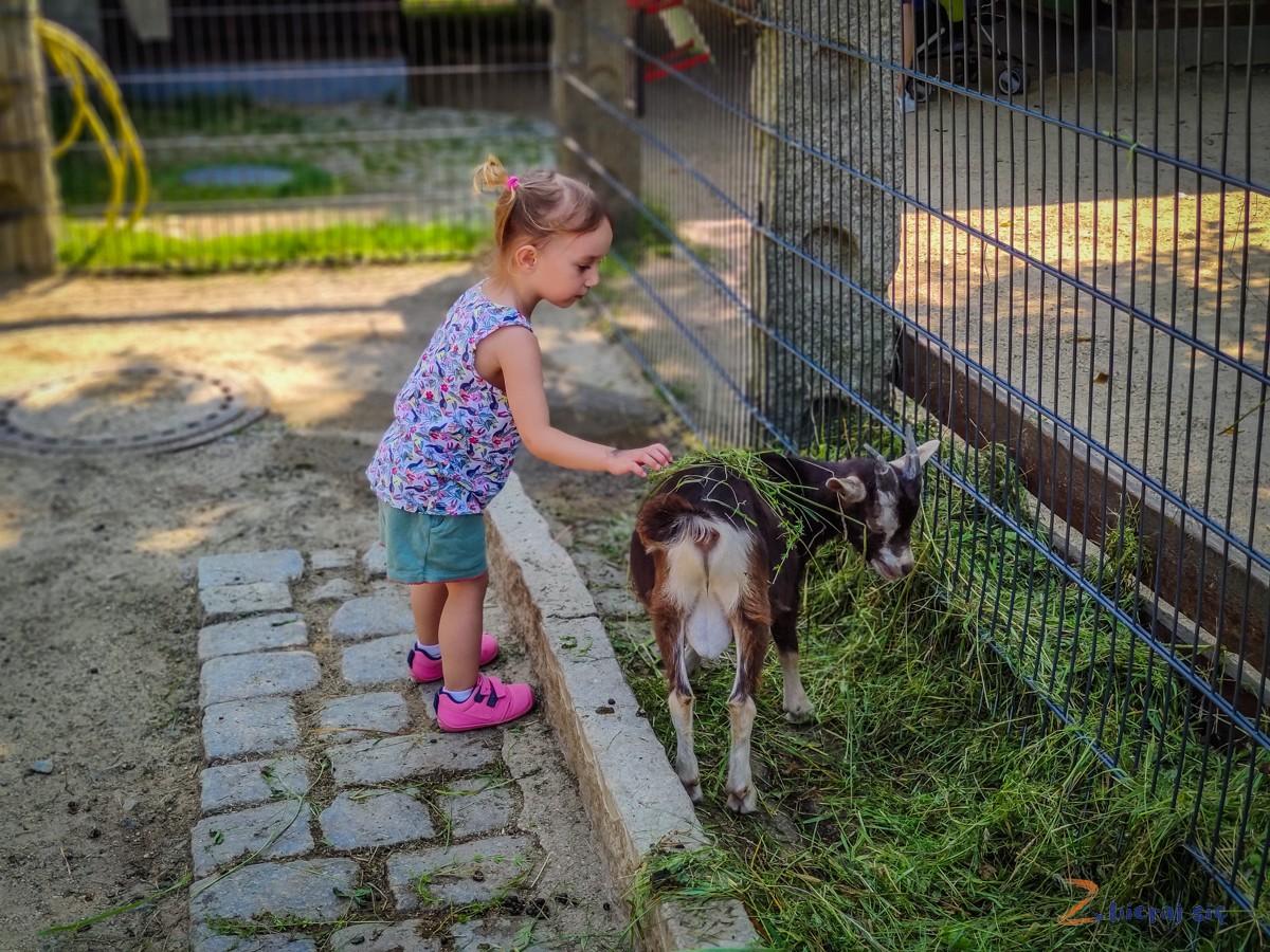 Wiejska zagroda Zoo Goerlitz
