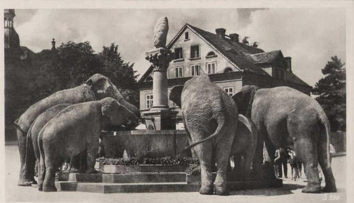slonie-przy-fontannie-bielawa
