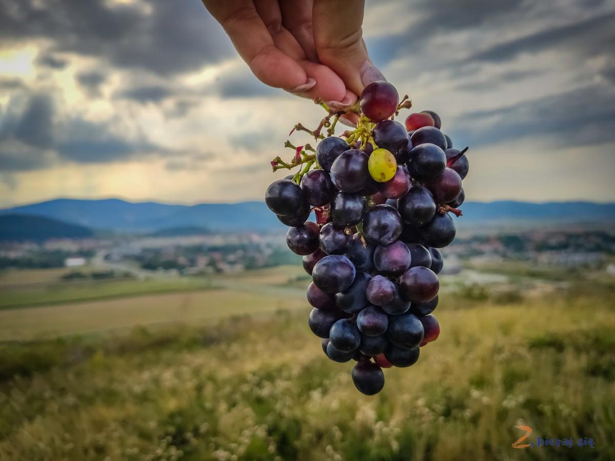 winnica-bielawska-bielawa-zbierajsie (13)